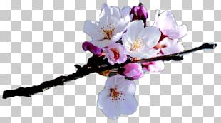 Aix-en-Provence Clipping Path Photography Flower PNG
