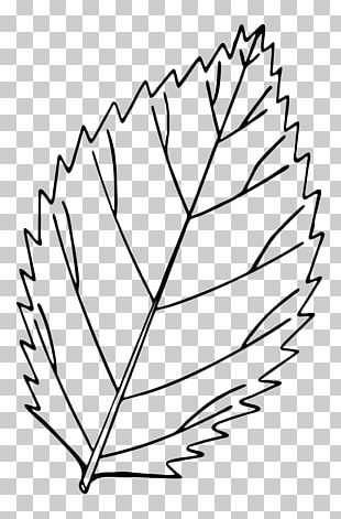 Autumn Leaf Color Drawing Red Maple PNG