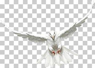 Feather Beak Book Soul Andrew Zuckerman PNG