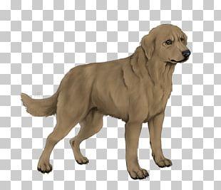 Golden Retriever Labrador Retriever Ancient Dog Breeds Companion Dog PNG