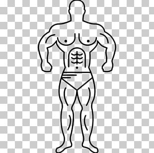 Electrical Muscle Stimulation Muscular System Muscle Hypertrophy Human Body PNG