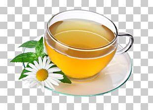 Green Tea Herbal Tea Drink PNG