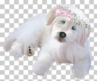Chihuahua Dachshund Black & White Puppy Pet PNG