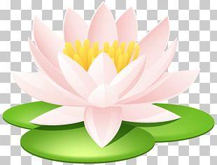 Nelumbo Nucifera Egyptian Lotus Nymphaea Lotus Lotus Seed Sacred Lotus Tattoo PNG