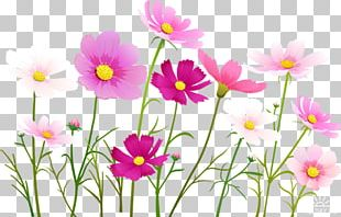 Flower Portable Network Graphics Cosmos PNG