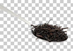 Nilgiri Tea Da Hong Pao Tea Plant PNG