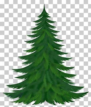 Pine Tree PNG