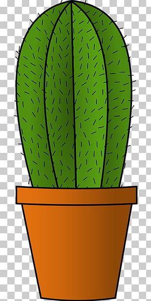 Cactus PNG