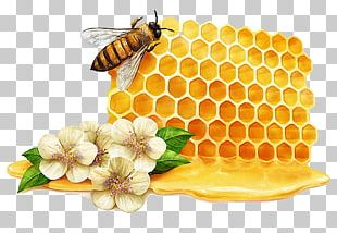 Tea Mu0101nuka Honey Bee Manuka PNG