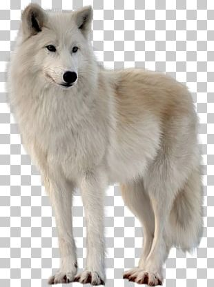 Canadian Eskimo Dog Greenland Dog Alaskan Tundra Wolf Arctic Fox Arctic Wolf PNG
