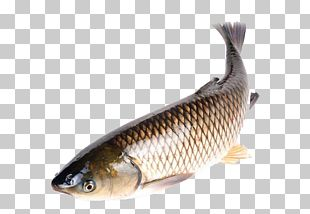 Seafood Crab Fish As Food Common Carp PNG