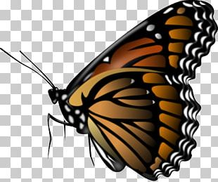 Monarch Butterfly Portable Network Graphics PNG