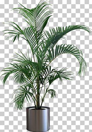 Houseplant Flowerpot Tree PNG