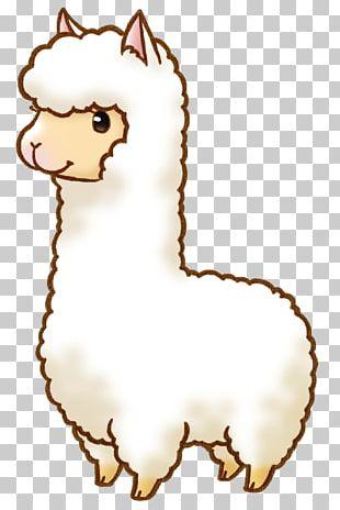 Alpaca Llama Drawing Cartoon PNG
