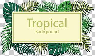 Tropics Euclidean Leaf PNG