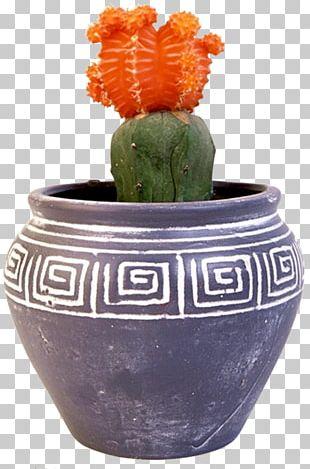 Cactus Flowerpot Houseplant Bonsai Vase PNG