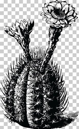 T-shirt Cactaceae Ietzmoois Thorns PNG