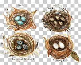 Edible Birds Nest Bird Nest Watercolor Painting Drawing PNG