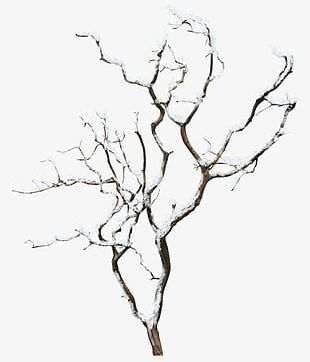 Winter Tree PNG