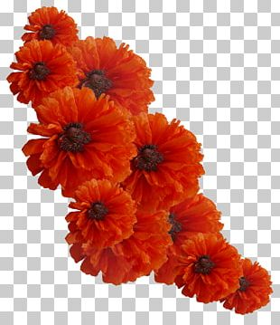 Cut Flowers Orange Yellow PNG
