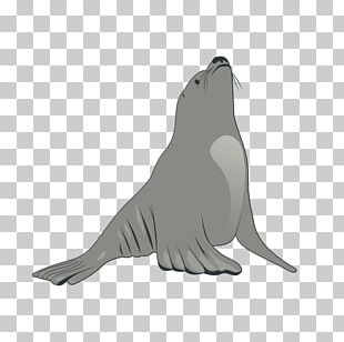 Earless Seal Sea Lion PNG