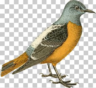 Hand-painted Birds PNG
