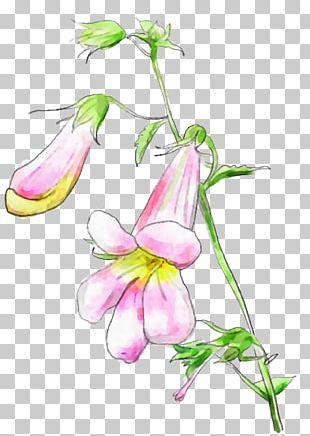 Desktop Floral Design Drawing PNG