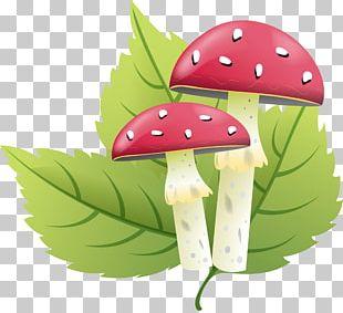 Letter Fungus Amanita PNG