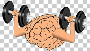 Brain Cognitive Training Nervous System Working Memory Neuroplasticity PNG