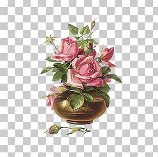 Rose Postcard Flower Greeting Card Pink PNG