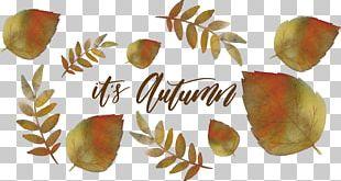 Watercolor Painting Leaf Autumn Deciduous PNG