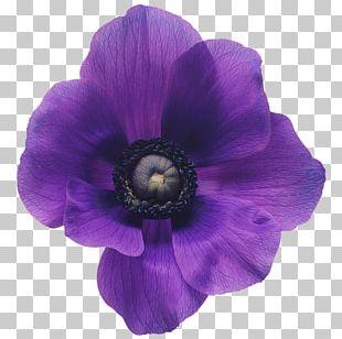Flower Bouquet Purple Violet Cut Flowers PNG