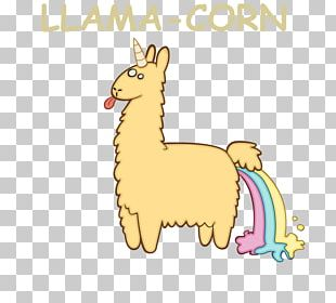 Llama Alpaca Illustration Drawing PNG