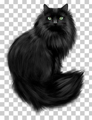 Kitten Persian Cat Norwegian Forest Cat Himalayan Cat Asian Semi-longhair PNG