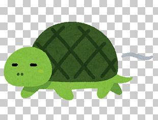 Turtle The Tortoise And The Hare Reptile Foot PNG