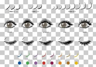Eyelash Extensions Beauty Parlour Artificial Hair Integrations Fashion PNG