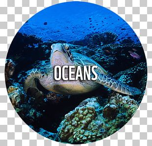 Loggerhead Sea Turtle World Wide Fund For Nature Conservation Ecology PNG