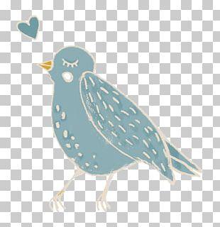 Beak Bird Of Prey Feather Fauna PNG