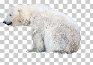 The Polar Bear Baby Polar Reindeer PNG