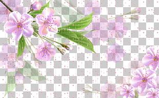 Flower Pink PNG
