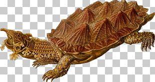 Turtle Reptile Archelon Mata Mata PNG