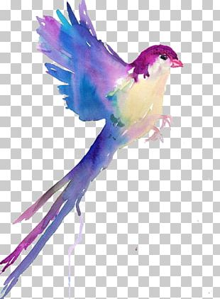 Bird Watercolor Painting Drawing Sketch PNG