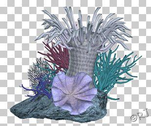 Coral Reef Aquarium Fish PNG