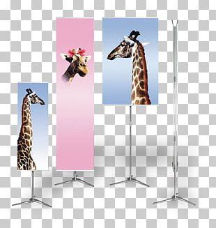 Giraffe Advertising PNG