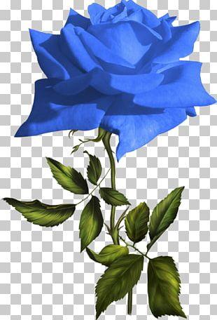 Blue Rose Garden Roses Flower PNG