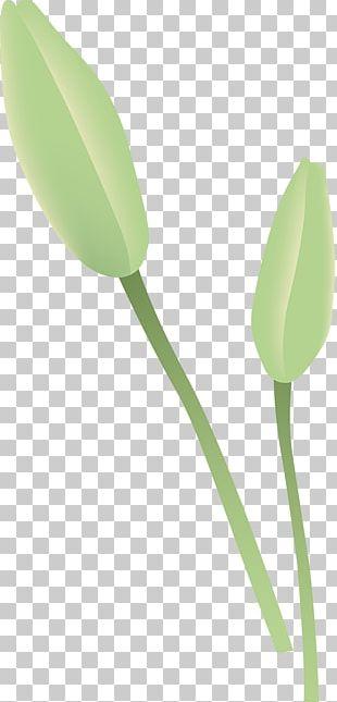 Tulip Petal Plant Stem Leaf PNG
