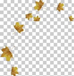 Light Leaf Autumn PNG