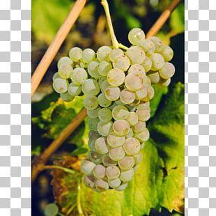 Sultana Savagnin Petite Arvine Canton Of Valais Wine PNG