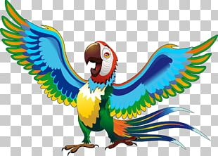 Parrot Cartoon Drawing Macaw PNG