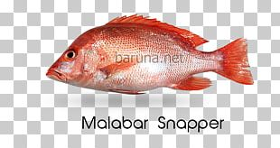 Northern Red Snapper Fish Products Tilapia Oily Fish Perch PNG